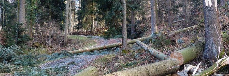 Le funi martellate sono la scelta ottimale per i professionisti del forestale